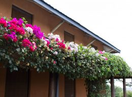 fathers-house-flowers