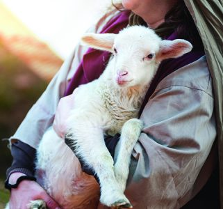 The shepherd holds the lamb in your arms