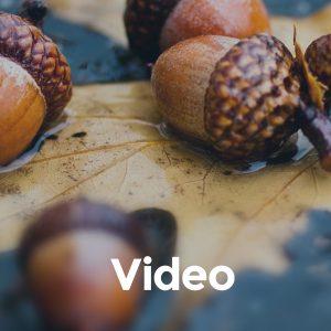 default_video