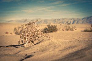 Public Domain tumble-weed