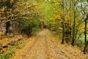 public-domain-autumn-forest-path