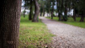 public-domain-paseo-en-el-parque