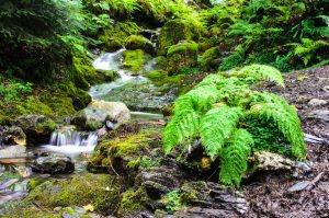 Public Domain Fern and waterfall