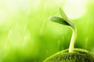 Public Domain bean-sprout-macro