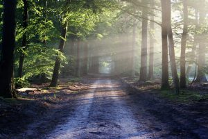 Pexels forest-hd-wallpaper-landscape